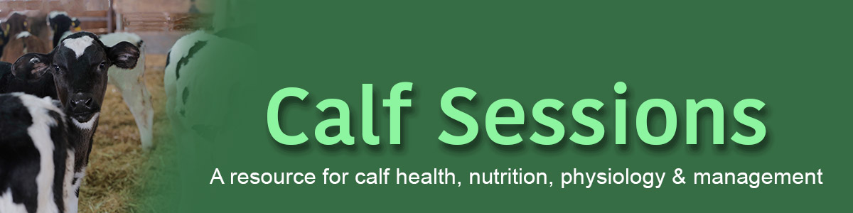 Calf Starter - big impact on calf growth - Calf Sessions