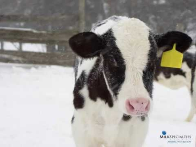 Winterize Your Calf Feeding Program