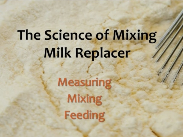 The Science of Mixing Milk Replacer
