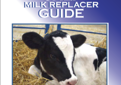 Calf Feeding & Nutrition Archives - Calf Sessions